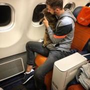 Hành khách bị phạt vì tráo mèo mang lên máy bay